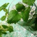 image cocktails_lr_0025-jpg