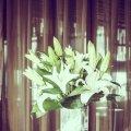 image elegant_hr_0017-jpg