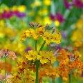 image flowers_hr_0002-jpg