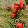 image flowers_hr_0006-jpg