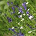 image flowers_hr_0009-jpg