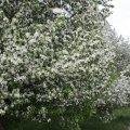 image flowers_hr_0011-jpg