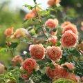 image flowers_hr_0013-jpg