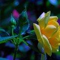 image flowers_hr_0015-jpg