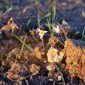 image flowers_hr_0017-jpg