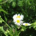 image flowers_hr_0018-jpg