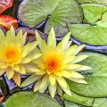 image flowers_hr_0020-jpg
