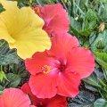 image flowers_hr_0021-jpg