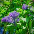 image flowers_hr_0022-jpg