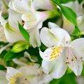image flowers_hr_0023-jpg