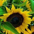 image flowers_hr_0024-jpg