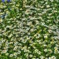 image flowers_hr_0025-jpg