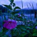 image flowers_hr_0026-jpg
