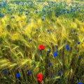 image flowers_hr_0027-jpg