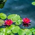 image flowers_hr_0029-jpg