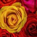 image flowers_hr_0030-jpg