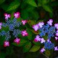 image flowers_lr_0002-jpg