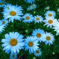image flowers_lr_0006-jpg