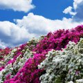 image flowers_lr_0010-jpg
