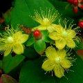 image flowers_lr_0013-jpg