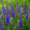 image flowers_lr_0017-jpg
