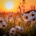 image flowers_lr_0018-jpg