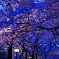 image flowers_lr_0020-jpg