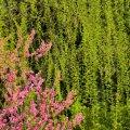 image flowers_lr_0021-jpg