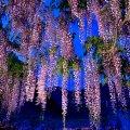 image flowers_lr_0022-jpg