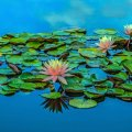 image flowers_lr_0027-jpg