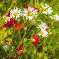image flowers_lr_0028-jpg