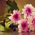 image flowers_lr_0029-jpg