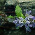 image flowers_lr_0030-jpg