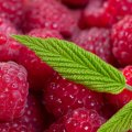 image fruits_hr_0001-jpg