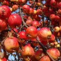image fruits_hr_0012-jpg