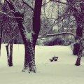 image bench_hr_0009-jpg