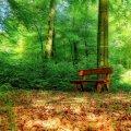 image bench_lr_0001-jpg