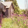 image farms_and_houses_lr_0016-jpg