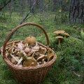 image mushrooms_lr_0001-jpg