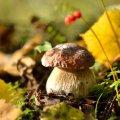 image mushrooms_lr_0003-jpg