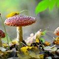 image mushrooms_lr_0008-jpg