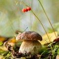 image mushrooms_lr_0009-jpg