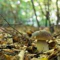 image mushrooms_lr_0010-jpg