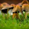 image mushrooms_lr_0012-jpg