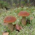 image mushrooms_lr_0015-jpg
