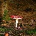 image mushrooms_lr_0016-jpg