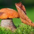 image mushrooms_lr_0017-jpg