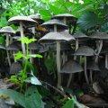 image mushrooms_lr_0018-jpg