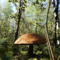 image mushrooms_lr_0019-jpg