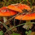 image mushrooms_lr_0020-jpg